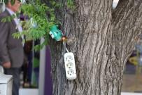 ELEKTRİK AKIMI - Ağaca Çekilen Üçlü Priz Tehlike Saçıyor