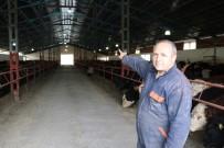 İDRIS KAYA - Ahırlarda Elektrik Üretiyorlar