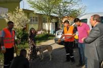 LİNÇ GİRİŞİMİ - Akşehir Belediyesi Silahla Vurulan Köpeğin Tedavisini Yaptırdı