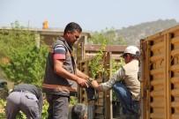 Mut Belediyesi'nden Çiftçilere 3 Bin Kayısı Fidanı