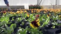 Van 'Bir Milyon Çiçek'le Renkleniyor