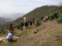 SOĞUKPıNAR - Giresun'da Tıbbi Ve Aromatik Bitkiler Uygulama Bahçesi Oluşturuldu