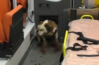 CEMAL GÜRSEL - İzmir'deki Saldırgan Köpeği Polisin Kurşunu Bile Durduramadı