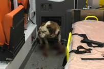 CEMAL GÜRSEL - İzmir'de bulldog dehşeti!