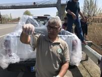OKSİJEN SEVİYESİ - Su Seviyesi Düşen Kanaldaki Balıklar Kurtarıldı