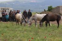 Akhisar'da İlk Kez At Panayırı Düzenleniyor