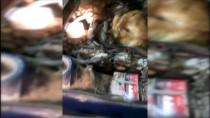 GÜMRÜK MUHAFAZA EKİPLERİ - Canlı Danaları Otomobilin Motorunda Yurda Sokmaya Çalıştılar