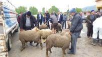 HAYVAN PAZARI - Devrek'te Çiftçilere Küçükbaş Hayvan Dağıtımı Yapıldı