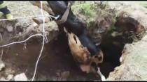 Muğla'da Kuyuya Düşen İnek İtfaiye Ekiplerince Kurtarıldı