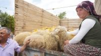 Sarıgöl'de İki Genç Çiftçi Küçükbaş Hayvanlarına Kavuştu