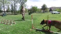 ÇOBAN KÖPEĞİ - Terörle Mücadelenin Mayın Ve EYP Avcılarına Hassas Eğitim