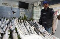 OMEGA - Tezgahları Havuz Balıkları Süslüyor