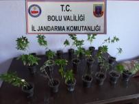 Bolu'da Hint Keneviri Ve Sahte İçki Operasyonu