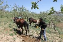 Siirtli Çiftçiler Eski Geleneğe Döndü