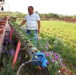 TARIM İLACI - Su Borularının İçinde Çilek Yetiştirdi
