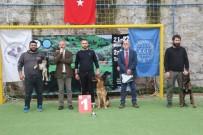Trabzon'da Uluslararası Köpek Irkları Yarışması