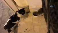 Bu Da Kedi Maması Yinen 'Sokak Faresi'