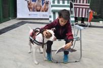Çocuklar 'Pati Oyunu' İle Hayvan Korkularını Yeniyor