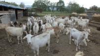 TÜRKIYE ELEKTRIK DAĞıTıM - Engelli Vatandaş Çoban Olmak İçin Devletten Destek Bekliyor