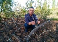 HÜSEYİN PEHLİVAN - Hisarcık'ta Üzüm Bağlarını Kırağı Vurdu
