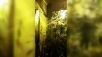 ALÜMİNYUM FOLYO - İç Mimar Evini Uyuşturucu Tarlasına Çevirmiş