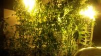 DİJİTAL TERAZİ - İç Mimar Evini Uyuşturucu Yetiştirmek İçin Seraya Çevirmiş