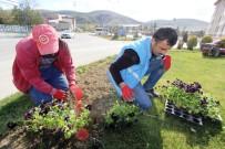 LALE SOĞANI - Bayburt'ta 80 Bin Adet Menekşe Ve Lale Soğanı Toprakla Buluştu