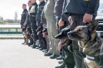 ÇOBAN KÖPEĞİ - Başkent K-9 Köpeklerine Emanet