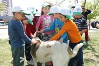 SOKAK HAYVANI - Odunpazarı'ndan Sokaktaki Dostlara Yardım Eli