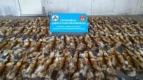 GÜMRÜK MUHAFAZA EKİPLERİ - Haydarpaşa Ro-Ro Limanında Çuvallar Dolusu Tilki Kürkü Ele Geçirildi