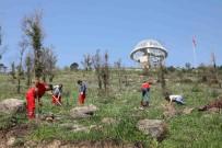 KARABAĞ - Bayraklı'da Ağaçlandırma Seferberliği