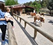 MADAGASKAR - İzmir Doğal Yaşam Parkı, Yeni Yavrularla Daha Da Büyüdü