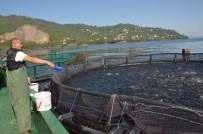 Ordu'dan Rusya Ve Japonya'ya Havuz Balığı İhracatı