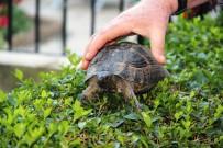 NAYLON POŞET - Poşet İçinde Çöpe Atılan Kaplumbağanın Hayatı Değişti