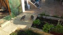 KıNALı - Hastalığına Rağmen 40 Yıllık Kuş Sevgisi Bitmiyor