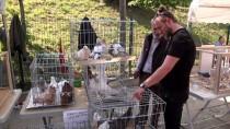 TERTIP KOMITESI - Sakarya 2. Tepeli Kostüm Güvercinleri Festivali