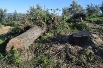 VATANSEVER - Eşinin Kestiği Ağacın Altında Kaldı Açıklaması Hayatını Kaybetti