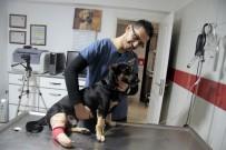 Köpeği Ezen Vicdansız Sürücü Kayıplara Karıştı