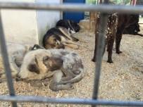 Milas'ta Sokak Hayvanları Emin Ellerde