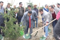 KAZANKAYA - Van YYÜ'de 10 Bin Fidan Dikildi