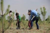 SAYıLAR - Açıköğretim Ormanları Büyümeye Devam Ediyor
