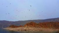 NEMRUT - (ÖZEL) Nemrut Krater Gölü'ndeki 'Martı Adası' Keşfedilmeyi Bekliyor