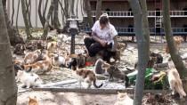 BAKIM MERKEZİ - Bu Kasabada Sokak Kedileri İçin Her Türlü Konfor Var