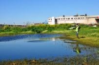ÇÖP KONTEYNERİ - Nazilli'de İlaçlama Çalışmaları Sürüyor