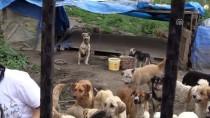 İNSANOĞLU - Sokak Hayvanlarına Aile Şefkatiyle Bakıyorlar