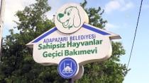 ORMAN MÜDÜRLÜĞÜ - Sokak Hayvanlarına Müzikli 'Terapi'