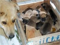 Belediye Bir Yılda 3 Bin 604 Sokak Hayvanını Rehabilite Etti