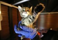 ÖZGECAN ASLAN - Buca'da Hayvan Sevgisiyle Terapi