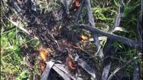 İznik Gölü'nde Sazlık Yangını
