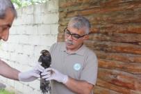 Mazot Tankına Düşen Kuş Kurtarıldı